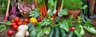Legumes aout